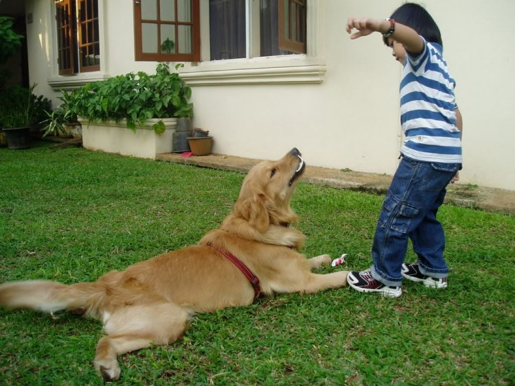 Hukum Memelihara Anjing Dalam Islam